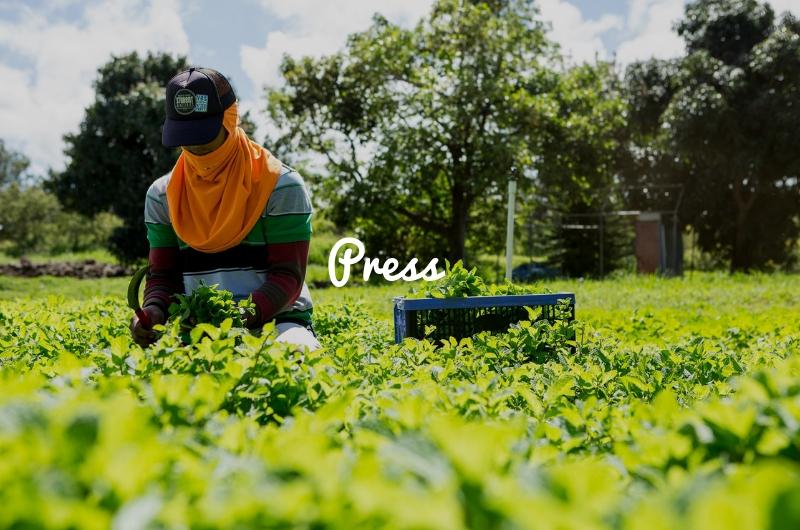 Press Evonuk Farm herb